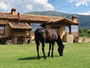 Granja-El-Enebral-Alojamiento-rural-5