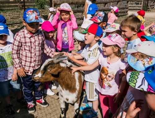 Planes con niños cerca de Madrid: ideas de excursión con el cole